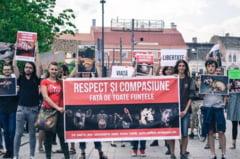 Mars pentru drepturile animalelor, la Cluj-Napoca