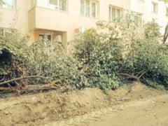 Masurile luate de Primarie dupa taierile de copaci din Bucuresti