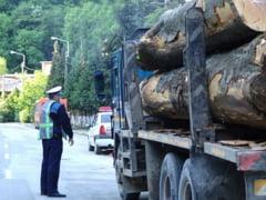 Material lemnos confiscat de politistii din Marginea