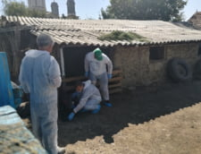 Medicul Valentin Tertis se pregateste sa ucida preventiv porcii din gospodaria unui ostrovean