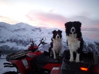 Mergeti pe munte? Poate prindeti un selfie cu cainii de avalansa Dara si Helios