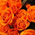Mesaje si idei de cadouri pentru Florii