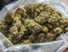Milioane de dolari la stat din impozitul pe marijuana - unde se duc banii