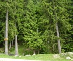 Ministerul Mediului: In Romania se taie ilegal 170.000 metri cubi de lemne anual