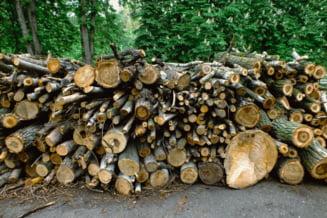Ministerul Mediului solicita firmelor din sectorul silvic sa se inscrie in SUMAL 2.0