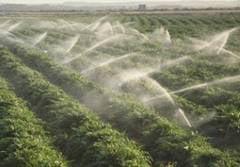 Ministrul Agriculturii: Avem cea mai mare rata de absorbtie din Romania