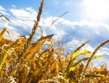 Ministrul Agriculturii: De vineri incepe plata ajutorului acordat producatorilor agricoli afectati de seceta