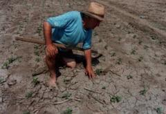 Ministrul Agriculturii promite despagubiri pentru fermierii afectati de seceta