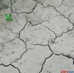 Ministrul Agriculturii spune ca Romania n-a mai avut asa seceta de peste jumatate de secol