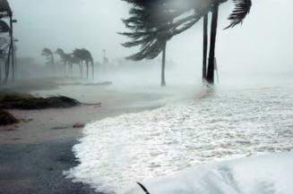 Miracolul din Bahamas: Un caine a fost salvat din ruine la o luna dupa uraganul Dorian