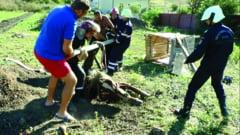 Misiune inedita - pompierii au salvat un cal