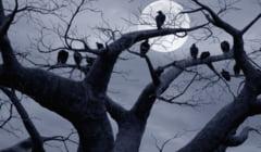 Misterele viselor: La ce sa te astepti cand visezi un copac
