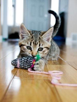 Mituri despre pisici, desfiintate
