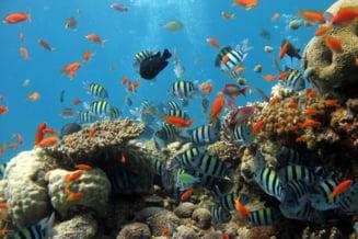 Moartea recifelor de corali, efecte de anvergura asupra oamenilor si speciilor marine