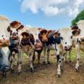 Modernizarea agriculturii din România și accesul la credite ieftine pentru fermieri
