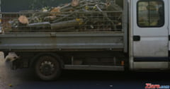 Modificari la Codul Silvic: Orice taiere de lemn devine infractiune. Cum va fi comercializat materialul lemnos