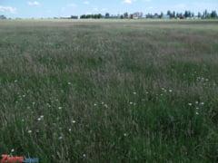 Modificari la Legea terenurilor: Terenul nu poate fi vandut mai ieftin ca in oferta (Video)