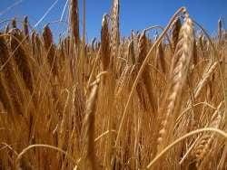 Moromete, chemat in blogosfera pentru reforma agrara