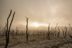 Multe regiuni, inclusiv sudul Europei, vor deveni desert. Foametea se instaleaza cu fiecare grad cu care incalzim planeta