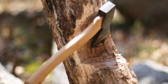 Mureseni cercetati pentru taiare ilegala si furt de arbori