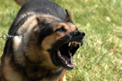 Muscatura de caine - Cat este ea de periculoasa si cum trebuie tratata