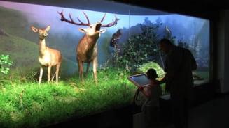 Muzeul Antipa se redeschide de Ziua Internationala a Copilului