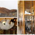 Muzeul renumit de stiinte ale naturii care poate ramane fara jumatate din piesele foarte rare. O institutie religioasa cere in justitie retrocedarea a peste 14.000 de bunuri