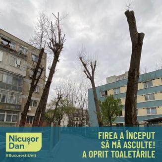 Nicusor Dan: Toaletarile arborilor au fost oprite in aceasta primavara si vara. Cine vede abateri sa sune la politie