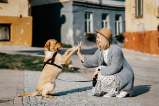 Noi prevederi legale in domeniul protectiei animalelor. Cand poate politia sa intervina