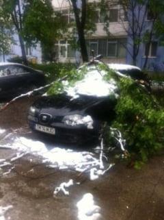 Noua masini au fost distruse de copacii cazuti