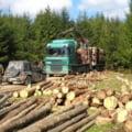 Noul radar al padurilor intra in vigoare la 1 noiembrie. Cum functioneaza aplicatia menita sa stopeze furtul de lemne