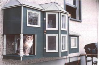 Nu mai mult de doua pisici si doi caini intr-un apartament - proiect de lege