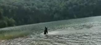 Nu va fi ucis! Ce se intampla cu ursuletul de la Sf. Ana, care a ranit o turista cand voia sa faca selfie cu el