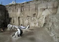 Numar record de oase de mamut, gasite intamplator in Mexic. Si inca o descoperire in premiera