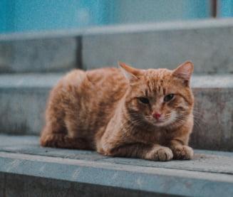 Numarul de pisici abandonate in Cipru a crescut in pandemie cu 30%. Inchiderea restaurantelor a accentuat problemele felinelor