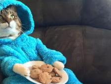 O ambasada SUA a trimis un mail oficial cu o invitatie la o petrecere in pijama cu pisici