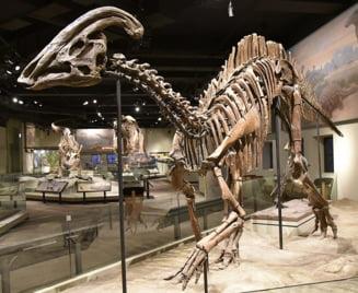 O boala care apare la oameni tocmai a fost descoperita la un animal preistoric