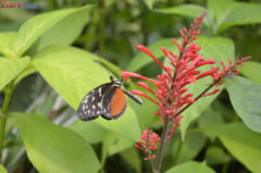 O cincime din plantele lumii sunt in pericol de disparitie