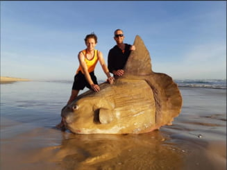O creatura marina bizara a esuat pe o plaja din Australia. Au crezut initial ca e parte dintr-o ambarcatiune