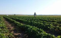 O familie din Suceava s-a intors din Germania, de la cules de capsuni, pentru a le cultiva pe plaiurile natale