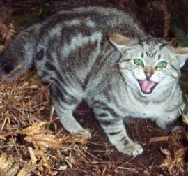O femeie a fost devorata de propriile pisici