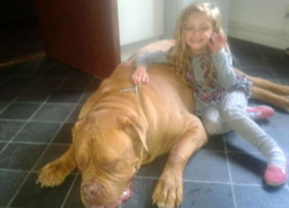 O fetita de patru ani sfasiata de un caine in propria casa, in fata mamei sale