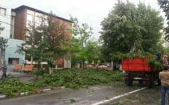 O fetita din Mures a murit dupa ce un copac smuls de furtuna a cazut pe o masina
