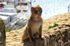 O maimuta a evadat de la Gradina Zoologica din Piatra Neamt UPDATE