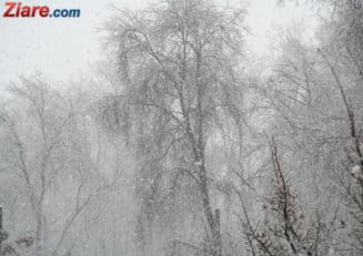 O noapte de ninsoare si haosul s-a instalat in Bucuresti: Aproape 100 de copaci au cazut. Firea da vina pe bucuresteni