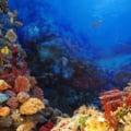 O noua boala distruge recifele de corali