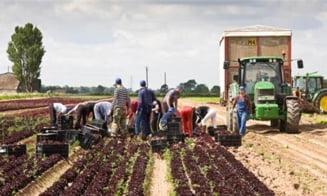 O noua lovitura pentru imigrantii din Marea Britanie: Generozitatea incurajeaza invazia