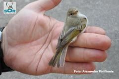 O noua specie de pasare a fost descoperita in Romania (Foto)