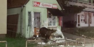 O pensiune si un magazin din Baile Tusnad au fost vizitate de ursi - imagini video