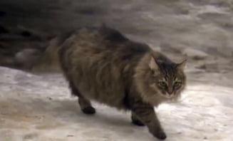 O pisica a impresionat o lume intreaga: Cum a salvat de la moarte un bebelus abandonat (Video)